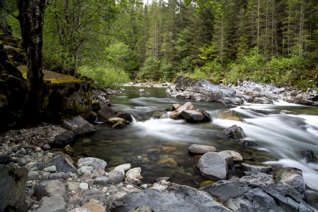 Upstream forests help prevent soil erosion. Photo by BLMOregon/Flickr.