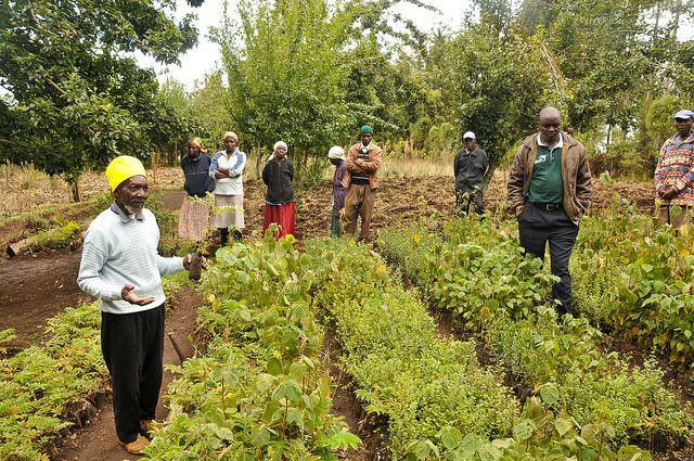 Restoration project in Kenya