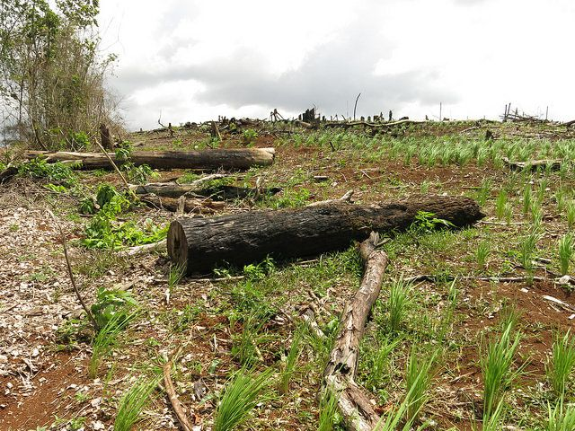 Cleared land in Costa Rica