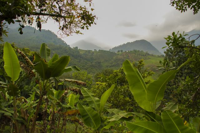 Farm under restoration, Colombia