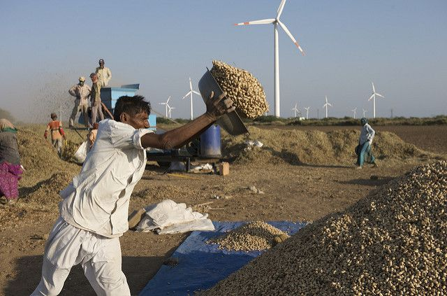 Farming amid wind turbines in India