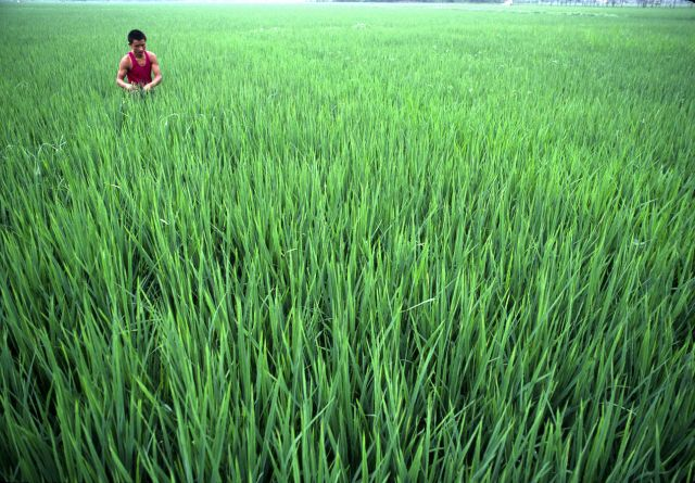 China's agricultural production could fall dramatically within a few decades due to shifts in precipitation and soil quality. Photo Credit: United Nations Photo, Flickr