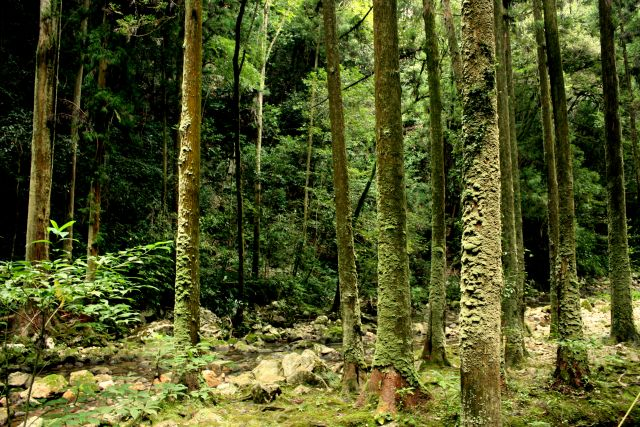 Forests are vital to climate action. Flickr/Kohei314