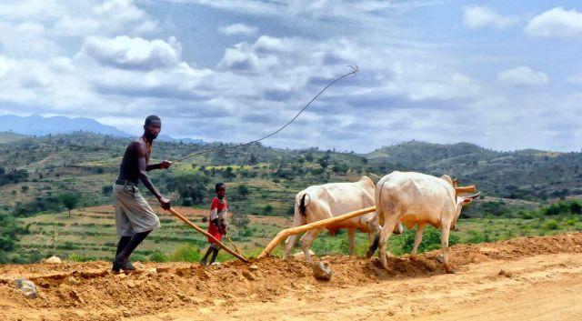 Farmers in Ethiopia. Flickr/Rod Waddington