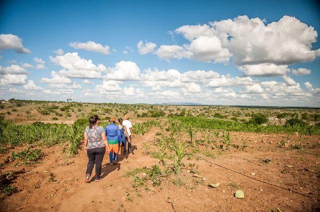 The landscape of Caatinga, the semi-arid but extraordinarily biodiverse region of Brazil