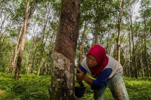 Agroforestry in Indonesia's Lubuk Beringin village. Photo credit: Tri Saputro, Flickr