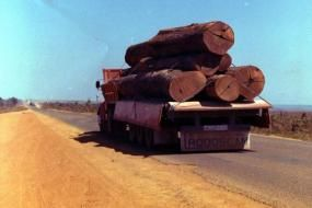 Logging in Mato Grosso, Brasil. Credit: c.alberto/ Flickr