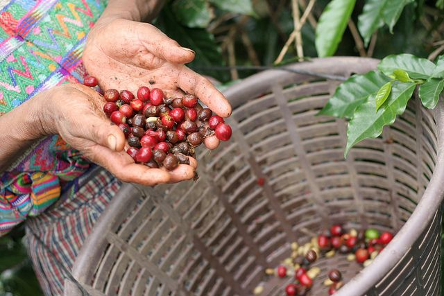 Dry conditions have already cut into Brazil's grain and coffee production. Photo credit: Nelo Mijangos/Flickr