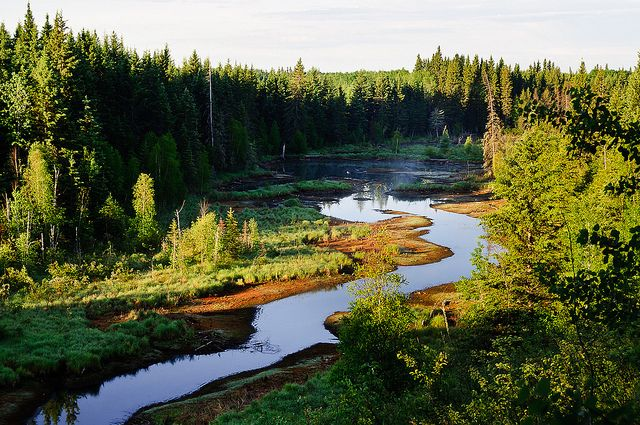 Canada's boreal forests feature mountain ranges; forested plains, bogs, and peatlands; coniferous and mixed forests; and millions of waterways. Photo credit: Ken Owen, Flickr