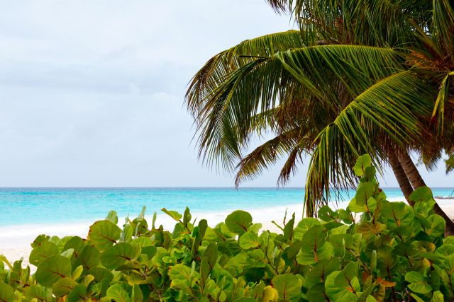 Tropical beach in Barbados. (Public Domain Pictures)