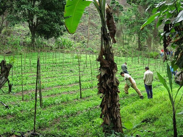 Costa Rica restoration
