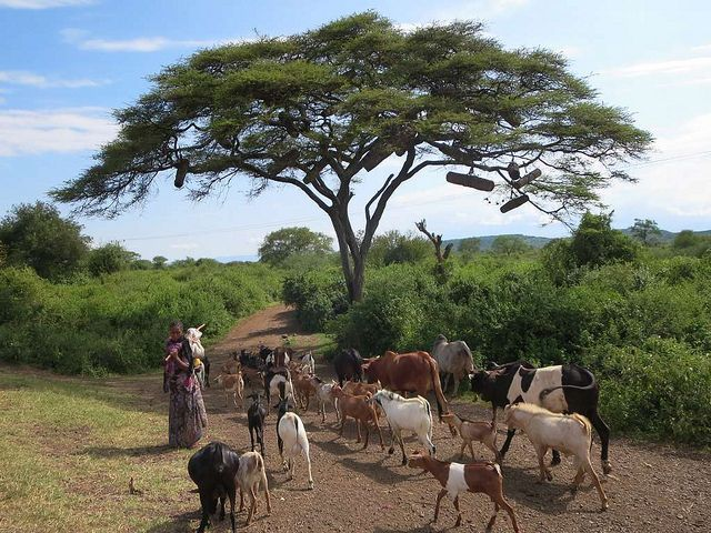 The government of Ethiopia committed to restore 15 million hectares of degraded land. Photo credit: David Stanley, Flickr