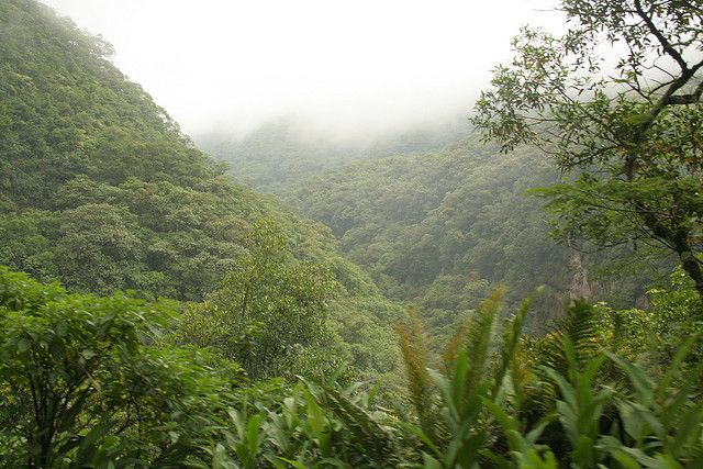 Brazil forest