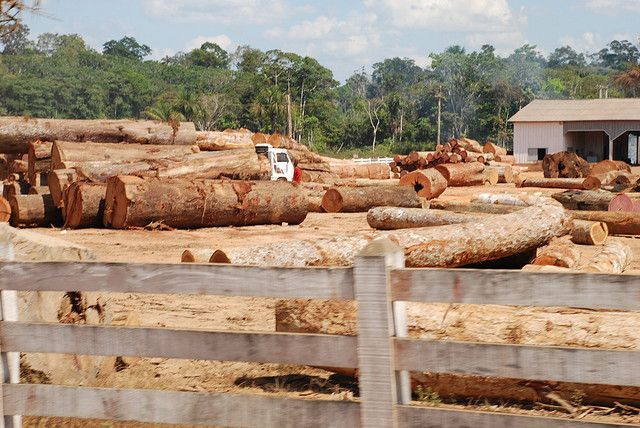 Illegal logging site in Brazil. Photo by Joelle Hernandez/Flickr.