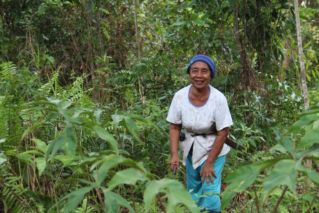 <SMALL>Indonesian forest | Photo credit: James Anderson, WRI 2014</SMALL>