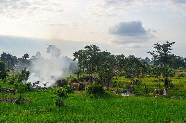 Marahoué National Park in the Ivory Coast has lost 93 percent of its forest cover between 2002 and 2008. Photo credit: jbdodane, Flickr 2013