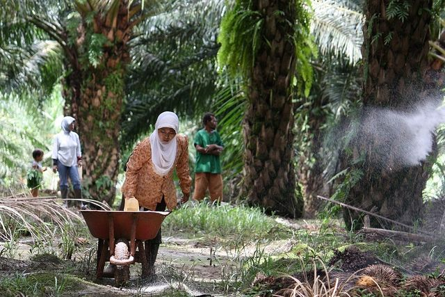 Palm oil plantation workers in Sumatra, Indonesia. Wilmar, a leading Asian agribusiness group, which trades more than 45 percent of the global palm oil supply, is committed to a deforestation-free supply chain. Photo Credit: CIFOR/Flickr