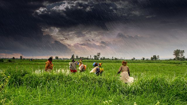 Numerous small-scale adaptation projects are underway across India's rainfed regions. (Madhya Pradesh, India) Photo by Rajarshi Mitra/Flickr.