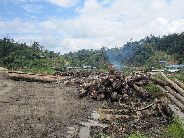 Logging in Sarawak, Malaysia. Photo by Ben Beiske/Flickr
