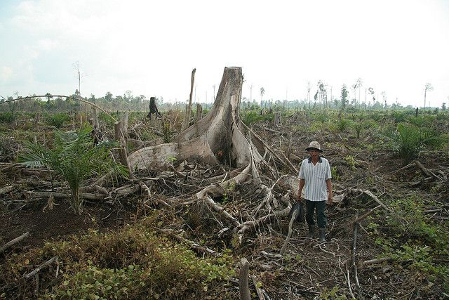 A comprehensive, proactive fires prevention plan, with a special emphasis on key subdistricts in Riau Province—involving government, business, and NGOs—can help ensure that Indonesia's forests continue generating economic, social, and environmental benefits for years to come. Photo credit: Wakx, Flickr 2007
