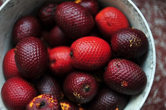 Wild fruit in Amazonia