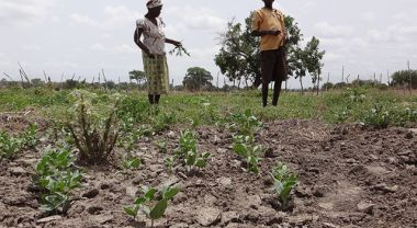 Farmers engage in climate-smart agriculture in Ghana. Photo credit: C Peterson (CIAT/CCAFS)