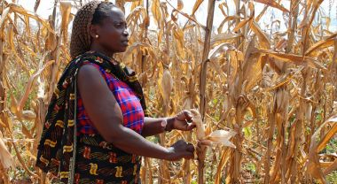 A Tanzania farmer shows the effects of drought on her maize crop. Photo credit: Anne Wangalachi/CIMMYT