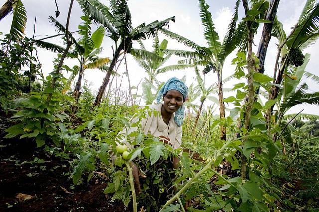 <p>Olive Sabila Chemutai tends tomatoes in Kapseror Village, Kapchorwa, Uganda. Photo by Kate Holt/Africa Practice, Australia Department of Foreign Affairs and Trade</p>