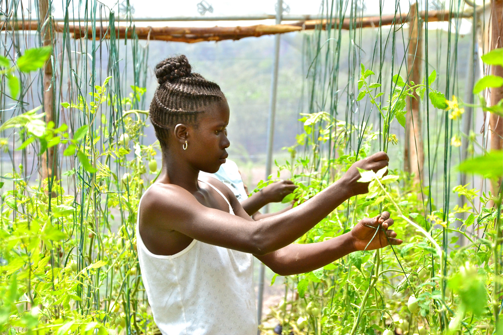 <p>Kenyan farmers have worked to climate-proof their agriculture. (Flickr/Cecilia Shubert)</p>