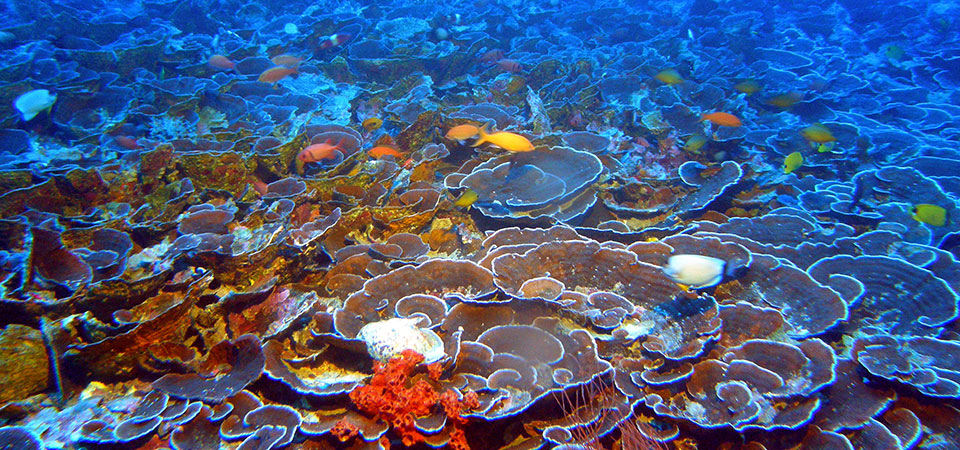 <p>Mesophotic reefs like this one are getting warmer as part of human-caused climate change. Flickr/NOAA\'S National Ocean Service</p>