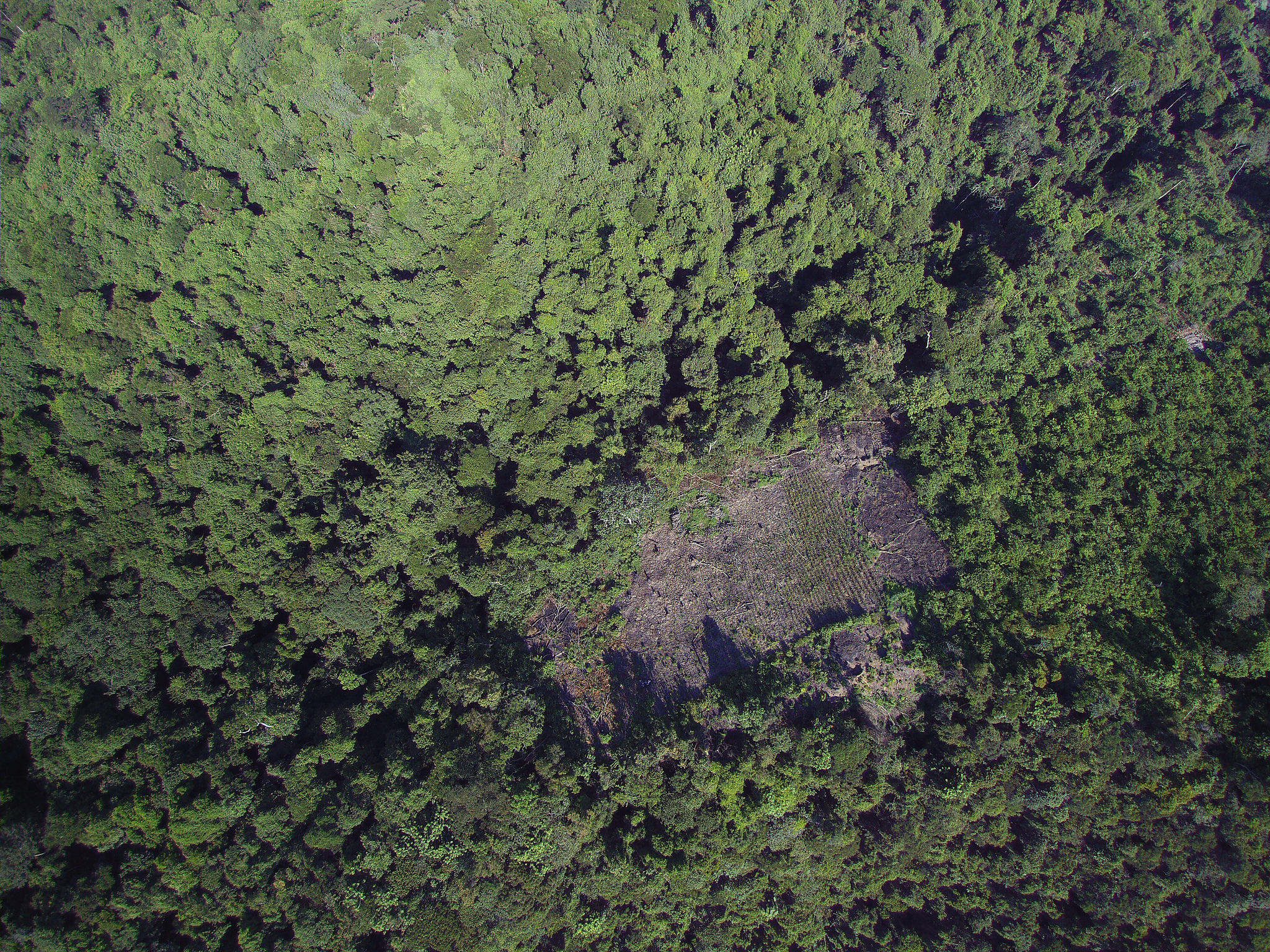 <p>Deforestation from above.</p>