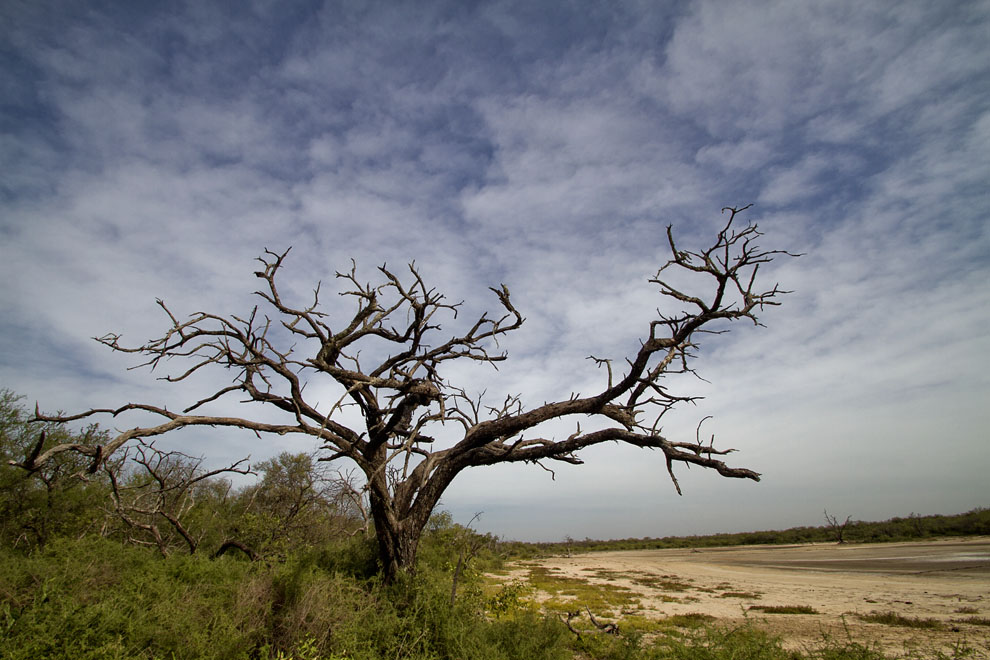<p>A tree on the edge of the desert in the Chaco. Flickr/Tetsumo</p>