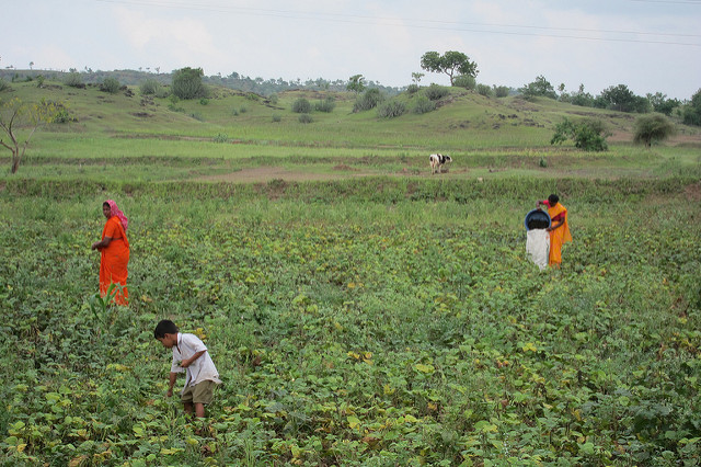 <p>In 2012, WRI worked with farm stakeholders in Maharashtra, India to produce watershed budgets. Photo by WRI/Flickr</p>