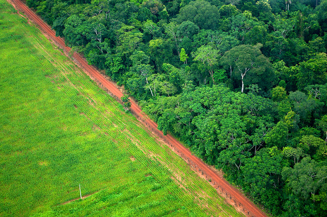 <p>Forests converted into fields in Acre, Brazil. Photo by Kate Evans/CIFOR</p>
