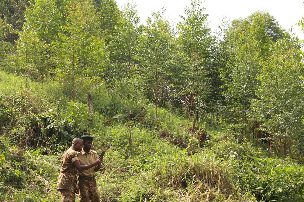 <p>Rangers checking Forest Watcher.</p>
