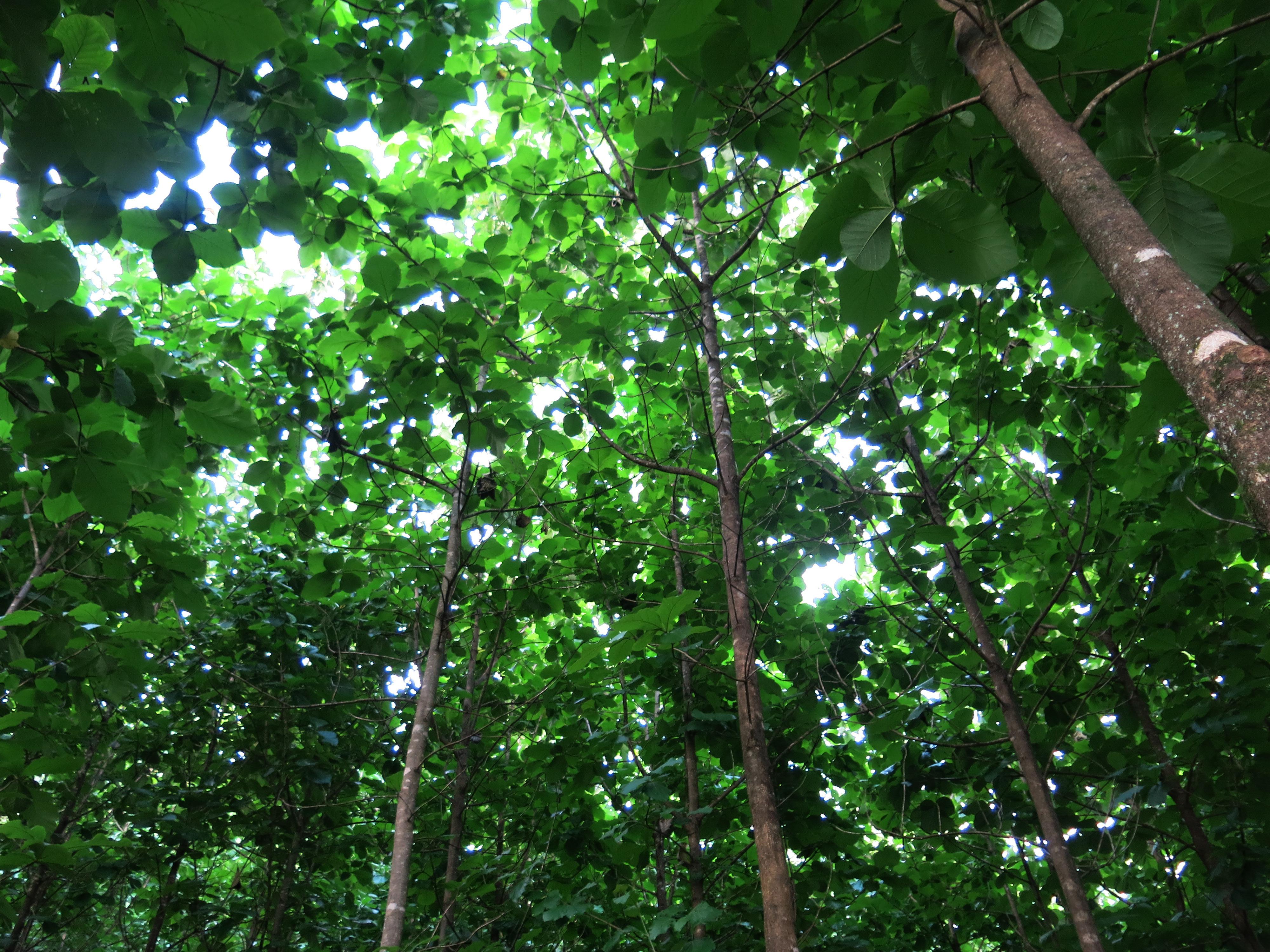 <p>Forestry operation in Costa Rica   Photo by Luciana Gallardo Lomeli / WRI</p>