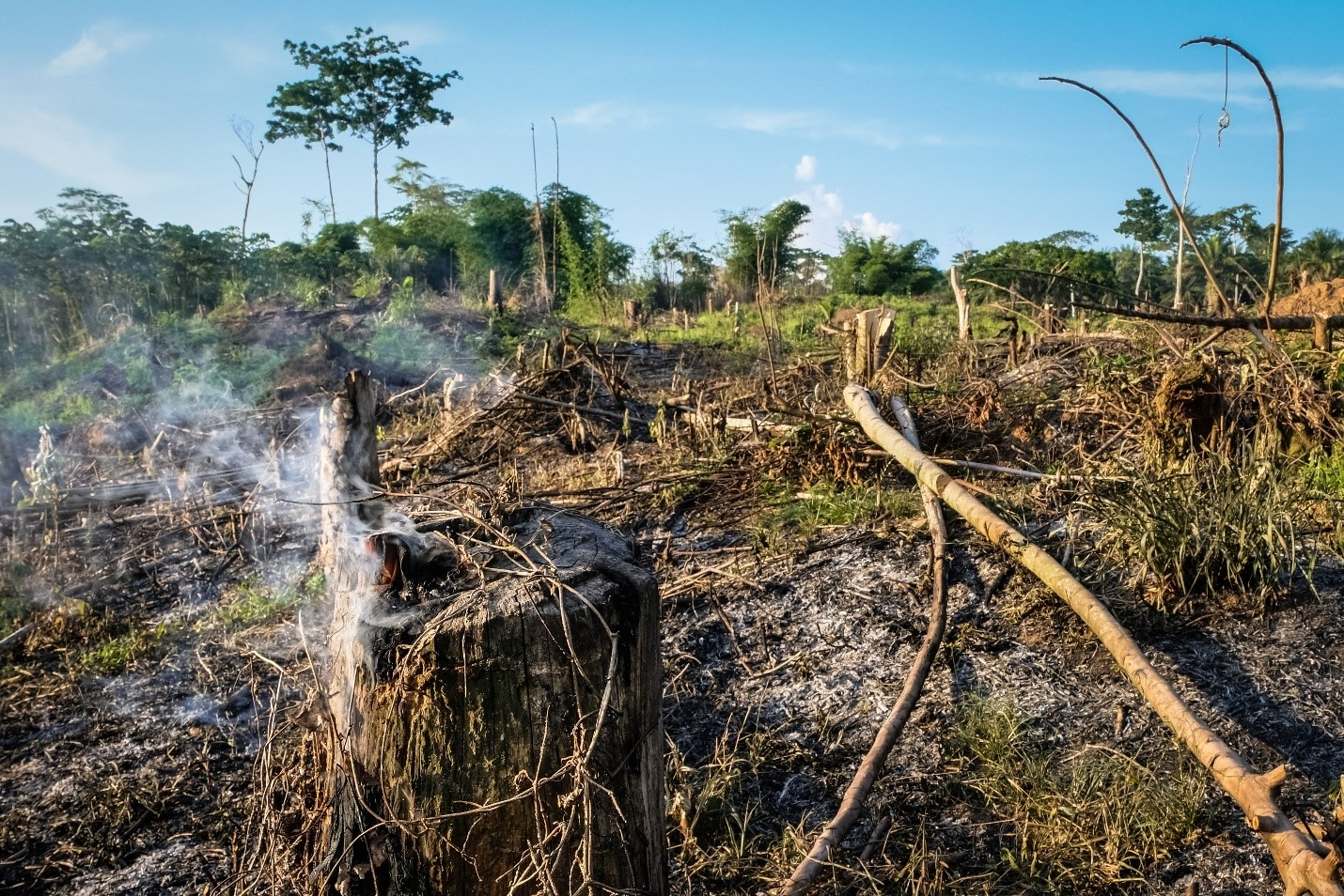 <p>Area cleared for agriculture near Yangambi, DRC. Flickr/CIFOR</p>