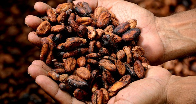 <p>Cocoa beans. Photo by Max Pixel</p>