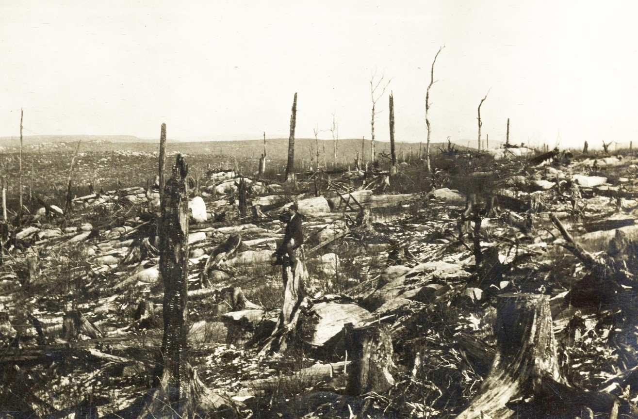 <p>After extensive logging in 1905, the Dolly Sods area of Canaan Mountain was left desolate and susceptible to further destruction by fire. Photo: courtesy of the Monongahela National Forest.</p>
