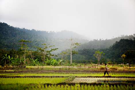 Farmer walking in field in Sumatra