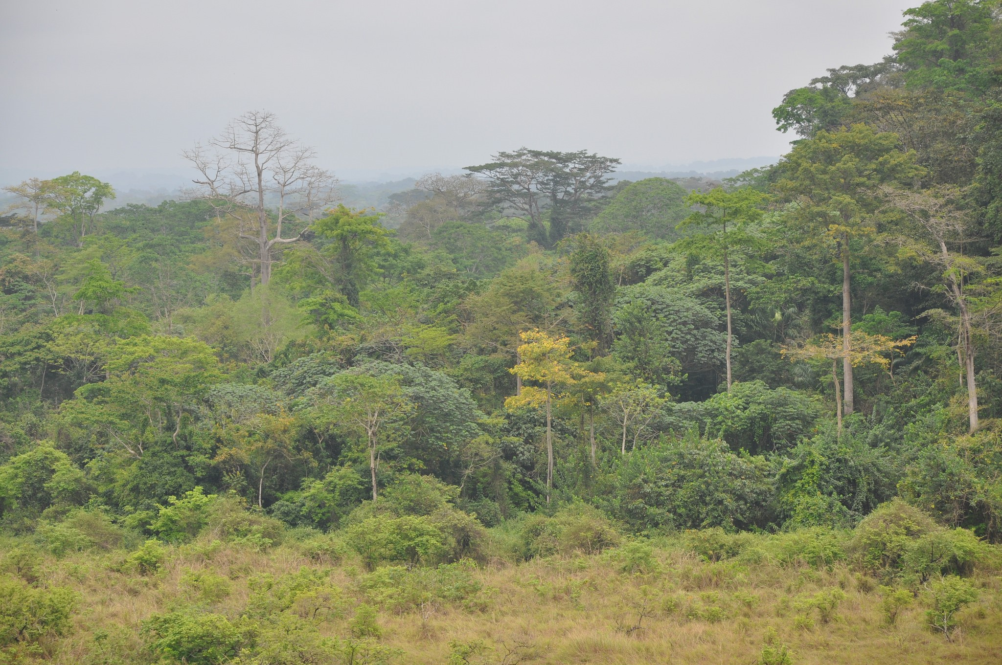 <p>The Olam concession conserves secondary forests identified as having High Conservation Value. Photo by The Forests Dialogue</p>