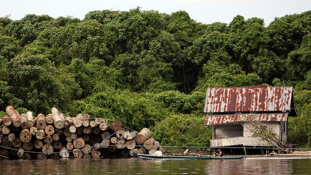<p>Penebangan hutan di Kalimantan Timur, Indonesia. Foto oleh Josh Estey/AusAID</p>