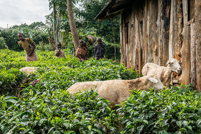 <p>Children living in Kenya\'s Mau Forest. Photo by Patrick Shepherd/CIFOR</p>
