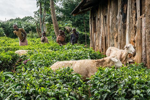 <p>Potret anak-anak yang hidup di Hutan Mau, Kenya. Foto oleh Patrick Shepherd/CIFOR</p>