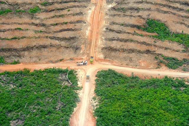 <p>Deforestation caused by palm oil development in Santa Clara de Uchunya. Photo by Mathias Rittgerott</p>