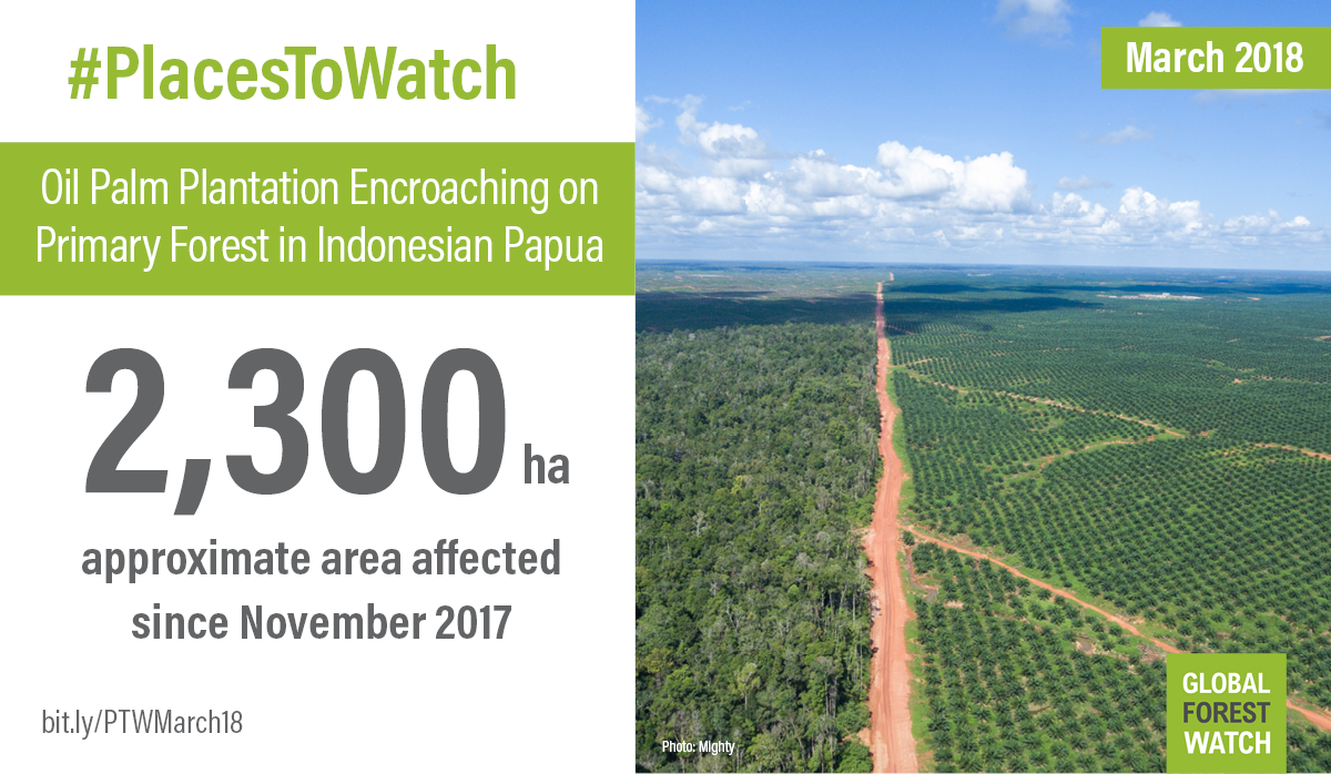 <p>Oil palm stretches out to the horizon in what was previously primary forest in the PT Bio Inti Agrindo concession, owned by POSCO Daewoo. Photo credit: Mighty.</p>