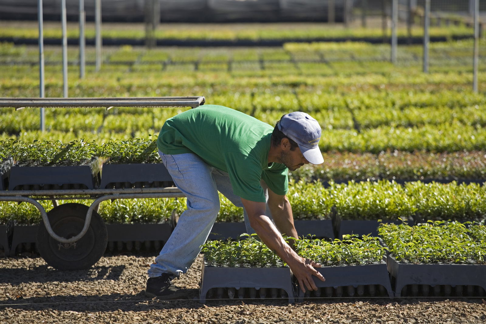 <p>Worker handles seedlings in state-owned tree nursery near Guarapuava, Brazil. Photo by Scott Warren/The Nature Conservancy</p>