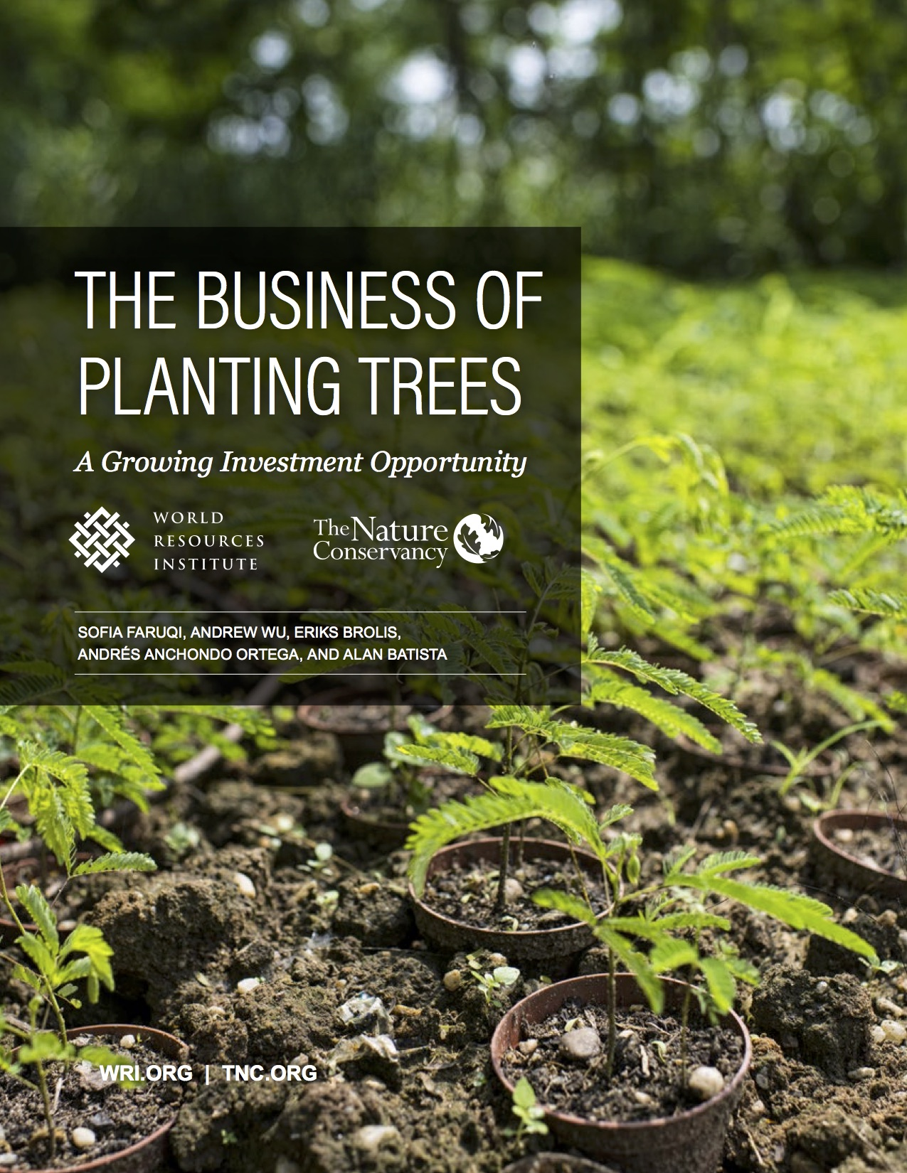 the business of planting trees a growing investment opportunity