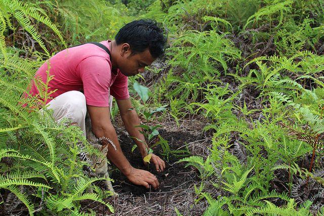 Gardener in Indonesia