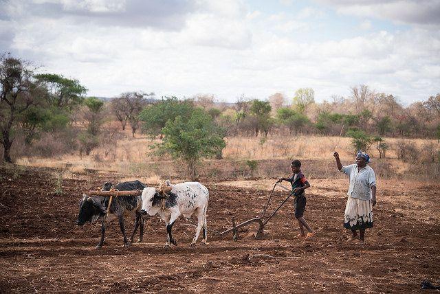 Farmer from rural Kenya working on her land